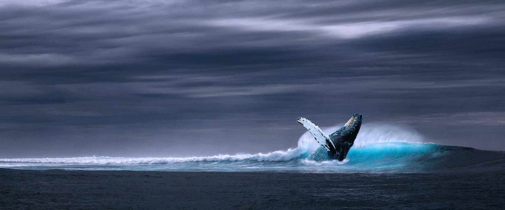 Charter Oceans for All