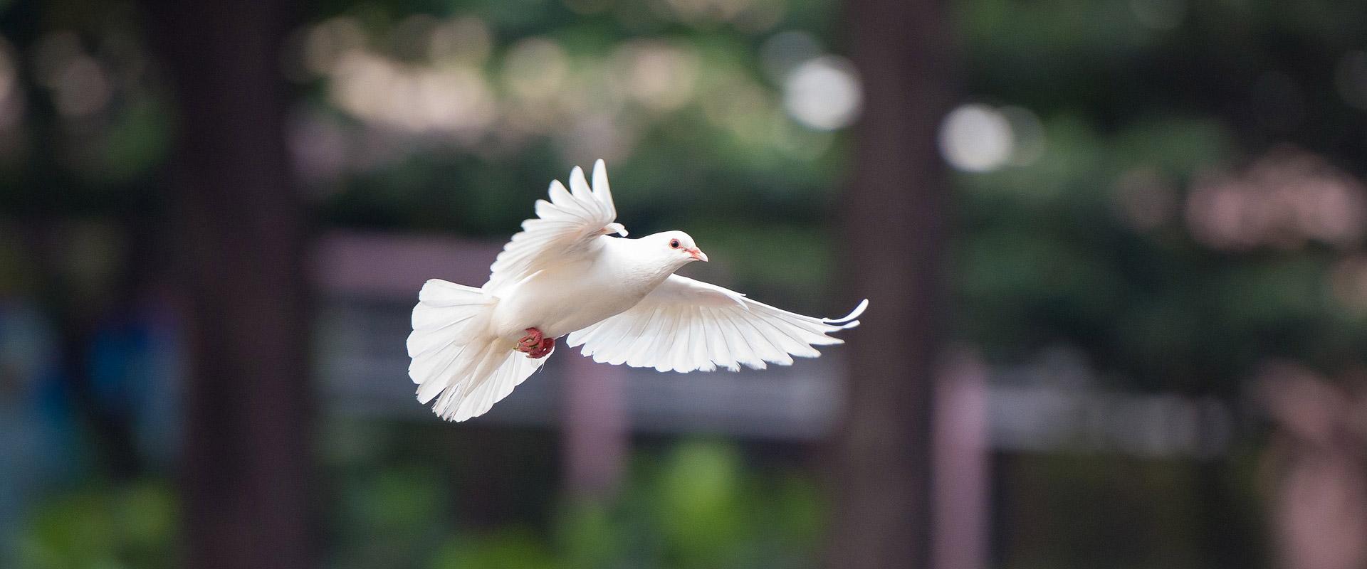 Vleugels van de Vrede