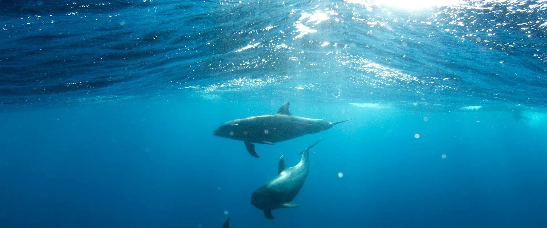 Delfín o buitre